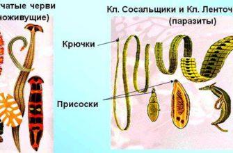 КРОВООБРАЩЕНИЕ — Большая Медицинская Энциклопедия