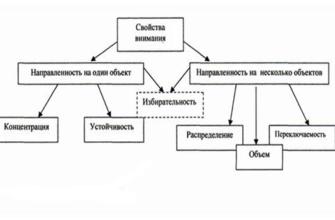 Внимание, его свойства и механизмы развития, Реферат