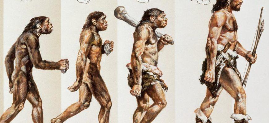 Реферат: Эволюция человека -