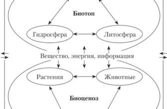 Реферат: Биоценозы и экосистемы -