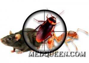 Принципы дезинфекции, дезинсекции и дератизации. Принципы стерилизации, предстерилизационной обработки