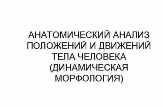 Анатомический анализ пловца - Скачать Реферат - Научная работа - 206260689161