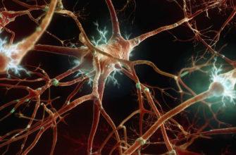 Кафедра неврологии с курсом нейрохирургии ИНПР   » 13. Занятие «Вегетативная нервная система»