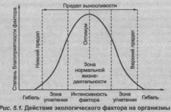 Экологические факторы и их действие (Реферат)