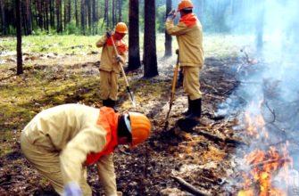 Действия при лесном пожаре: правила, особенности и рекомендации
