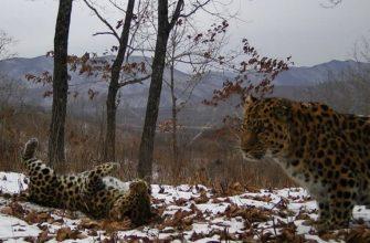 Красная книга Приморского края | Образовательная социальная сеть