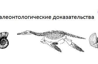 Урок 2. доказательства эволюции -  Биология -  11 класс -  Российская электронная школа