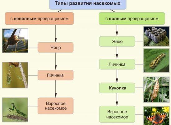 реферат найти Постэмбриональное развитие организма