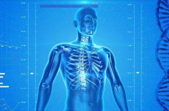 Реферат: Предмет, цели и задачи анатомии -