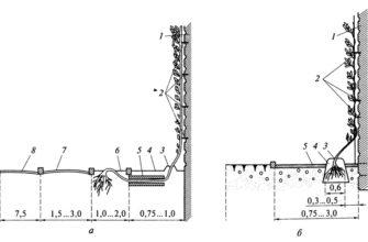 Вертикальное озеленение | Ландшафтная архитектура и зеленое строительство | Totalarch