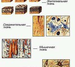 2.8.1. Витамины, минеральные вещества и микроэлементы