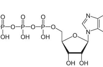 Аденозинтрифосфат (АТФ) – определение, структура и функции | fissi