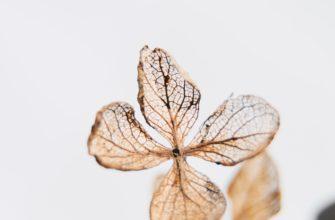 Анорексия и кахексия в паллиативной помощи: практические рекомендации для врачей — Про Паллиатив