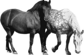 Коневодство. Технология производства продукции коневодства