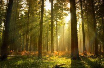 Съедобные дикорастущие растения в природе   Выживание в дикой природе