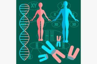 Реферат: Генетика пола, наследование, сцепленное с полом