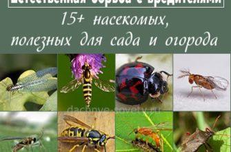 15  полезных насекомых для сада и огорода: с фото и описанием
