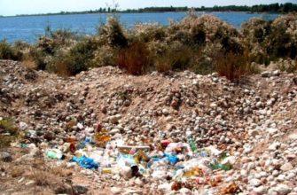 Загрязнение почвы: причины, последствия, решение проблемы