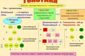 Реферат Государственная должность понятие, категории и группы