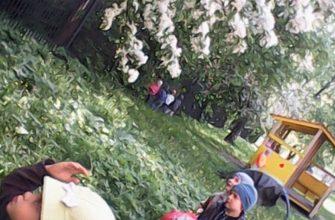 """Доклад """"Экологическое воспитание дошкольников""""   Методическая разработка (старшая группа) по теме:    Образовательная социальная сеть"""